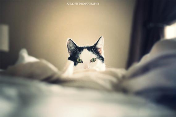 Tips Memotret Kucing A
