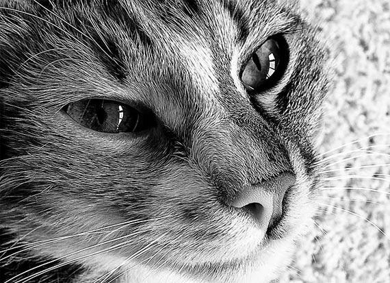 Tips Memotret Kucing B