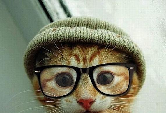 Tips Memotret Kucing C