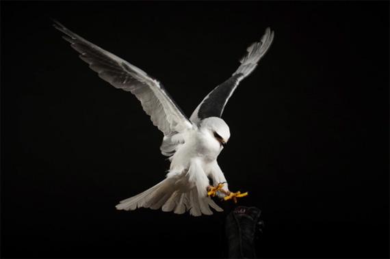 memotret burung di studio