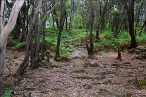 hutan cantigi oleh Sovian Ch