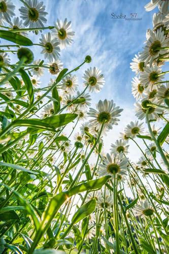Taman bunga, bunga indah