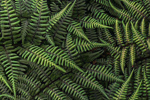 Tekstur Dalam Fotografi